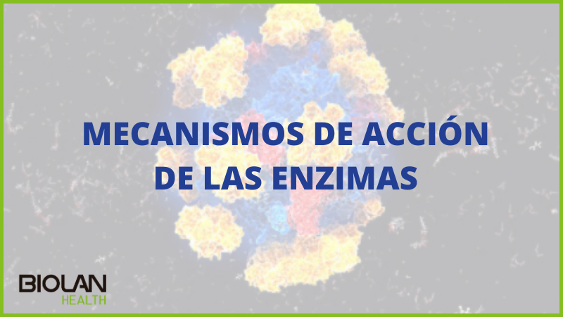 https://biolanhealth.com/wp-content/uploads/2021/03/MECANISMOS-DE-ACCION-DE-LAS-ENZIMAS.png